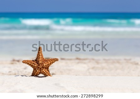 Starfish on caribbean sandy beach, travel concept  - stock photo