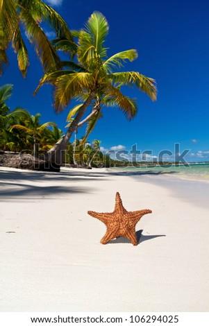 Starfish on caribbean sea beach with palms, Dominican Republic - stock photo