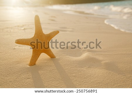 starfish on golden sand beach with waves in  soft sunset light, shallow dof - stock photo