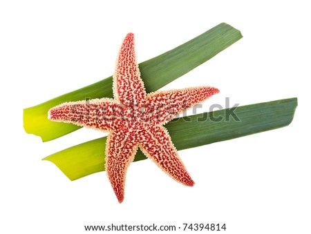 starfish on green leaves isolated on white - stock photo