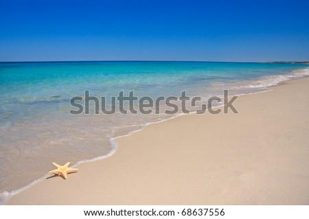 Starfish on perfect beach - stock photo
