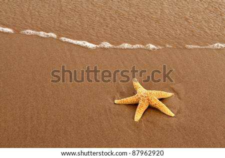 Starfish on red sand of Prince Edward Island - stock photo