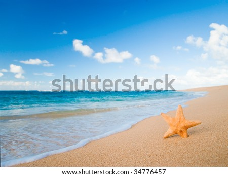starfish on sand with turquoise water background