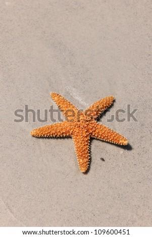 Starfish on sandy beach during sunny day - stock photo