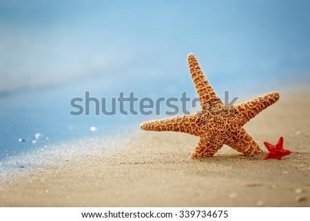 Starfish on seascape background - stock photo