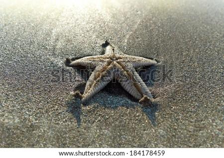 Starfish on the beach. - stock photo