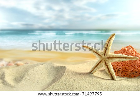 Starfish on the Beach. - stock photo