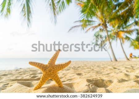 Starfish on the beach,Copy space for your text. - stock photo