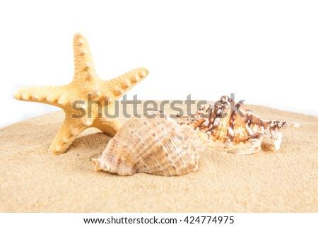 Starfish on the beach. Starfish isolated on white background - stock photo