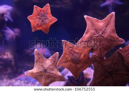 Starfish on the glass aquarium - stock photo