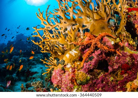 Starfish on the reef of the Red Sea - stock photo