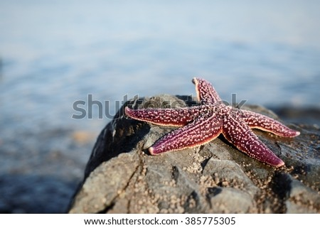 starfish on the rock - stock photo