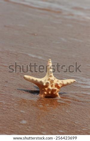 starfish on the shore of a sandy beach, Crimea, Russia - stock photo