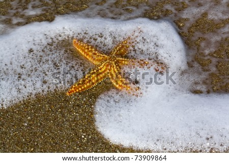starfish on the shore of the Atlantic Ocean - stock photo