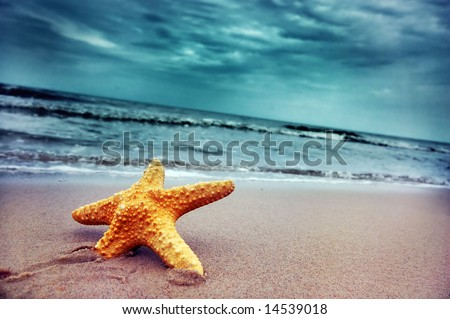Starfish on the tropical beach - stock photo