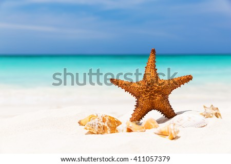 Starfish on the white sandy beach, Copy space for your text - stock photo