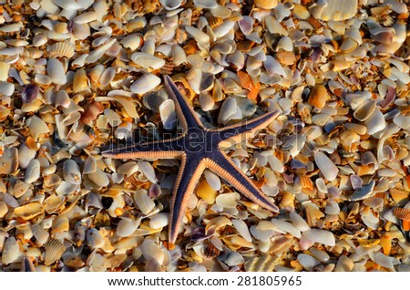 Starfish on top of shells on the beach - stock photo