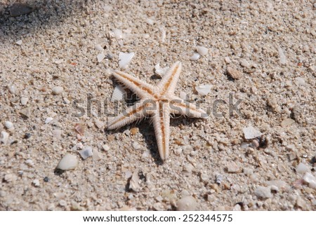 Starfish on wet sand - stock photo