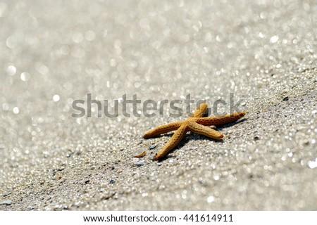 starfish on wet sand - stock photo