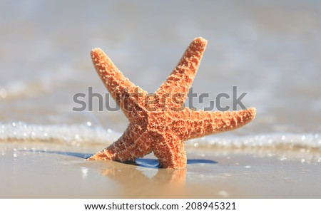 Starfish on wet sand at seashore  - stock photo