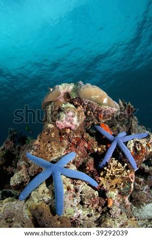 starfish paradise - stock photo