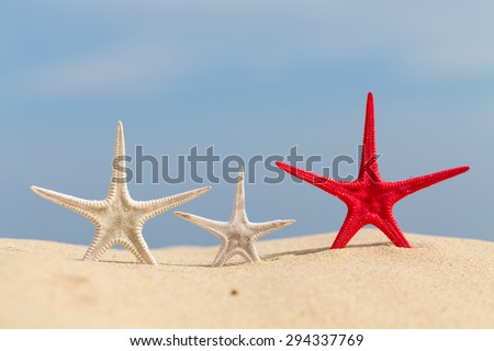 Starfish resting on the sandy beach in Thailand. - stock photo