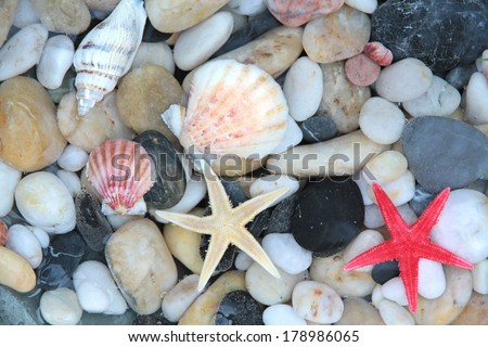 Starfish, seashell, and colorful pebble stones in crystal clear water - stock photo