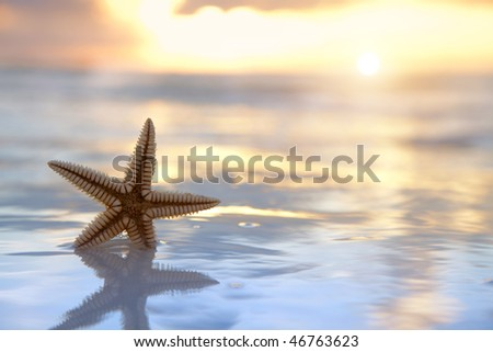 starfish shell in the sea on sunrise background - stock photo