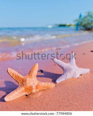 Starfish Stranded on a Beach - stock photo