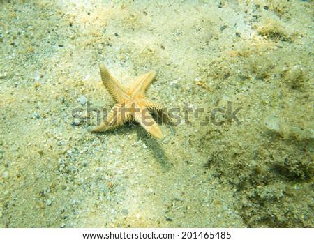 Starfish turning itself back the right way up - stock photo
