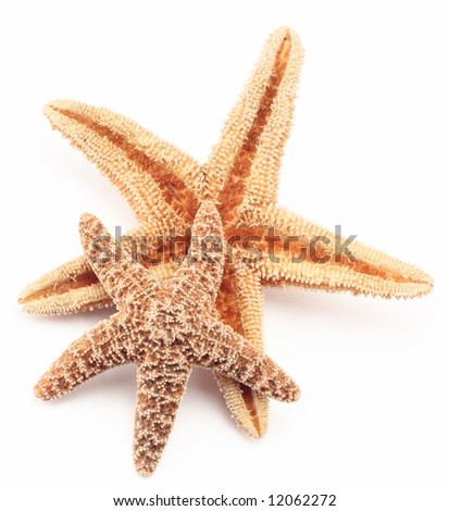 starfish two close up detail sea life tropical - stock photo