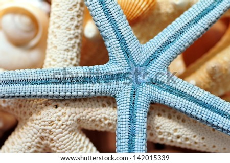 Starfish with seashells - stock photo