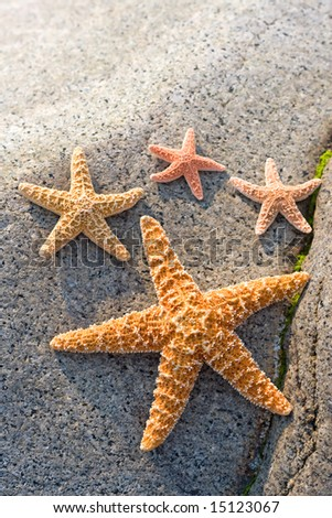 Starfishes on a stone - stock photo