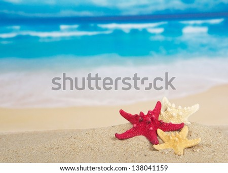 Starfishes on the beautiful sea coast - stock photo