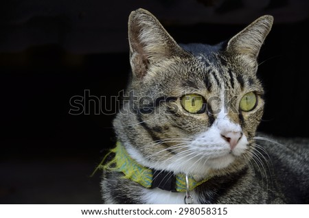 Staring cat - stock photo
