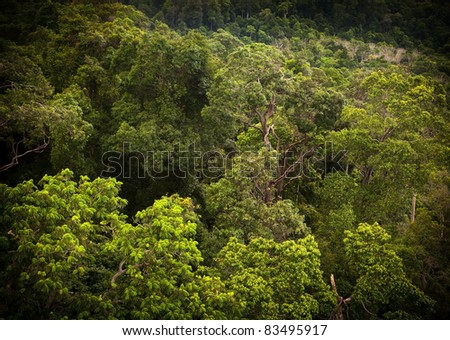 Staring into thick tropical forest in vibrant green