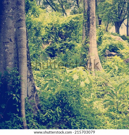 Staring into thick tropical jungle in vibrant green with Instagram style filter - stock photo