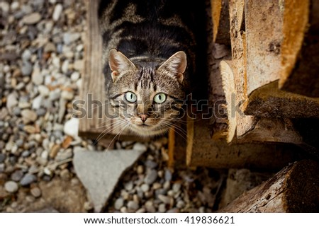 Staring tabby cat in the garden - stock photo