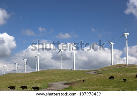 Stark white power generating wind turbines, under Spring blue sky, behind a field of wildflowers, range cattle, California.