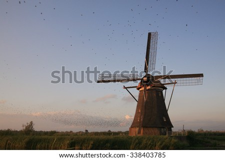Starlings roosting on Dutch windmill; Unesco World Heritage Site Kinderdijk, South Holland, Netherlands