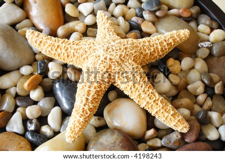 Start fish on different colors pebbles - stock photo