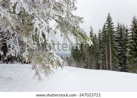 Start of a ski marked piste among the spruce forest in cloudy weather