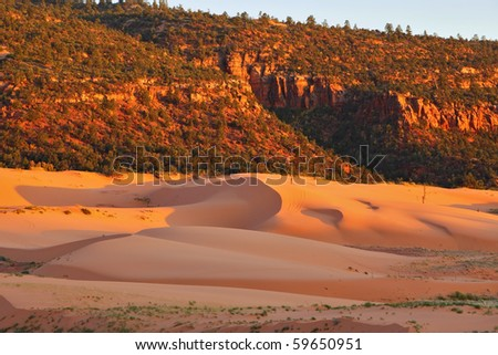 State Park Coral Pink Dunes at sunset. Delicate colors and shadows - stock photo