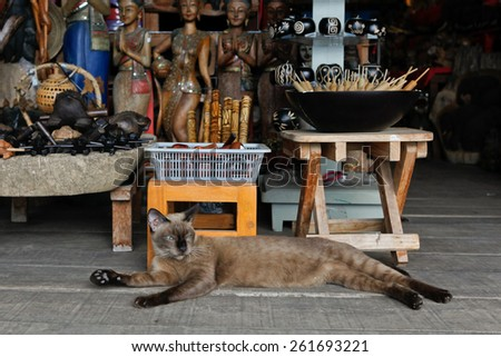 Stately thai cat lies in gift shop - stock photo