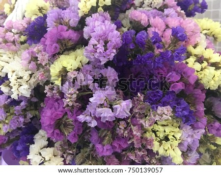 statice flowers yellow pink purple statice stock photo 750139057