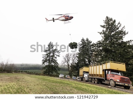 STAYTON, OR - NOV 20: A helicoptor delivers fresh cut Christmas trees to a waiting truck near Stayton, Oregon, USA on November 20, 2011. Oregon harvests more than 6 million Christmas trees annually. - stock photo