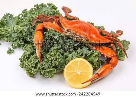 Steamed Blue Crab with lemon slices and garnished with kale on white background - stock photo