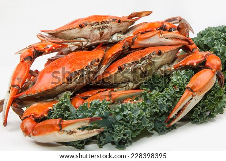 Steamed Blue Crabs, one of the symbols of Maryland State and Ocean City, MD, garnished with kale on white background  - stock photo