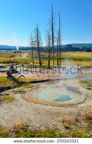steaming geyser and dead trees in Upper Geyser basin of Yellowstone National Park, Wyoming - stock photo