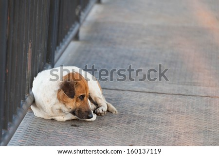 steel flyover and stray dog - stock photo